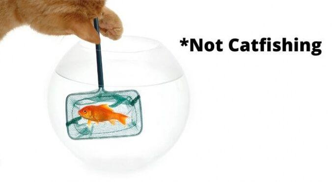 Qué es la pesca de gatos y cómo reconocerla en las redes sociales