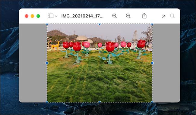 Seleccione la imagen completa en Vista previa.